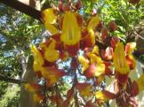 Blume13_web