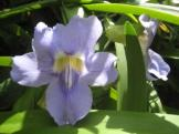 Blume15_web
