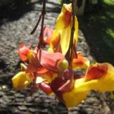 Blume1_web