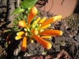 Blume9_web